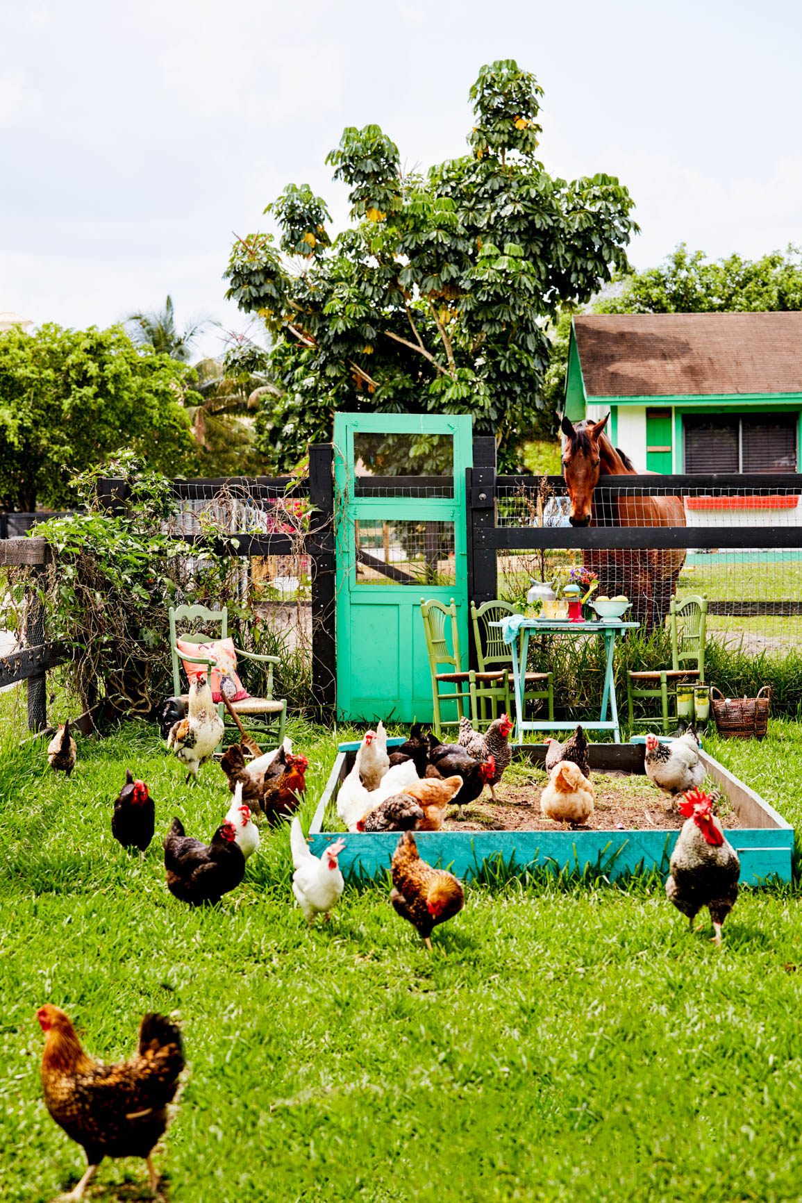 free-range chickens in the garden